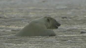 Center for Biological Diversity TV Spot, 'Polar Bear'
