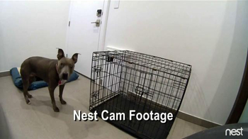 Nest TV Spot, 'HGTV: Container Home Dogs'