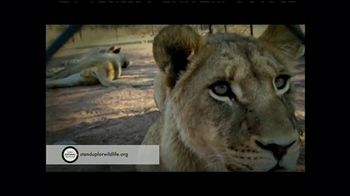 World Animal Protection TV Spot, 'Where They Belong'