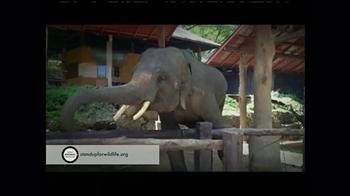 World Animal Protection TV Spot, 'Where They Belong' - Thumbnail 1