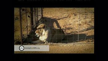 World Animal Protection TV Spot, 'Where They Belong' - Thumbnail 4