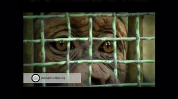 World Animal Protection TV Spot, 'Where They Belong' - Thumbnail 5
