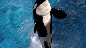 SeaWorld TV Spot, 'The New Future of SeaWorld' - 542 commercial airings