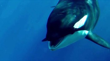 SeaWorld TV Spot, 'The New Future of SeaWorld' - Thumbnail 3