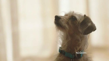 PetSmart TV Spot, 'Protect Your Dog' - Thumbnail 1