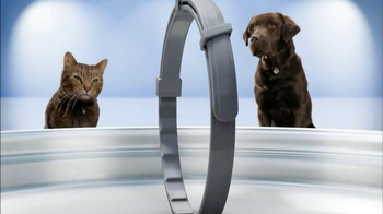 Seresto Large Dog TV Spot, 'Non-Greasy Collar' - Thumbnail 2