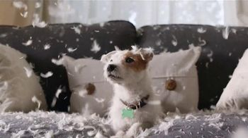 Angie's List TV Spot, 'Good Dog' - 3414 commercial airings