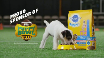 Pedigree Puppy TV Spot, 'Puppy Bowl Tryouts No. 9: Gotta Be A Puppy' - Thumbnail 8