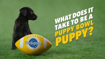 Pedigree Puppy TV Spot, 'Puppy Bowl Tryouts No. 9: Gotta Be A Puppy' - Thumbnail 2