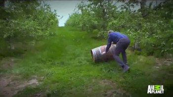 Angry Orchard TV Spot, 'Animal Planet: Treehouse Masters Sweepstakes' - Thumbnail 2