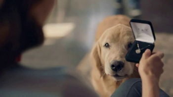 Kay Jewelers TV Spot, 'Man's Other Best Friend: Valentine's Day:  Save 30 Percent' - Thumbnail 1