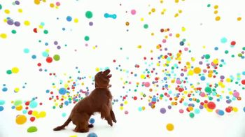 NexGard Chewables for Dogs TV Spot, 'La felicidad de los perros' [Spanish] - 1394 commercial airings