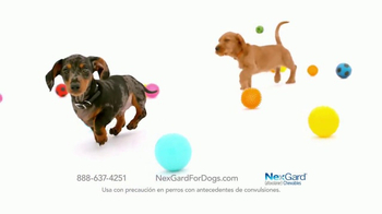 NexGard Chewables for Dogs TV Spot, 'La felicidad de los perros' [Spanish] - Thumbnail 8
