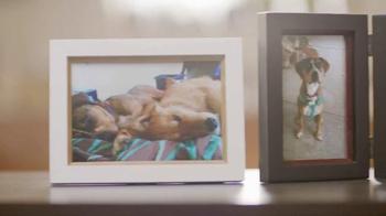 Purina Dog Chow TV Spot, 'Oddie y Django' [Spanish] - Thumbnail 2