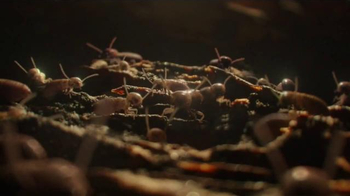 Terminix TV Spot, 'Nature's Wonders' - Thumbnail 3