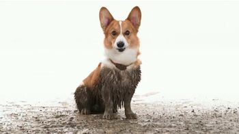 NexGard Chewables for Dogs TV Spot, 'Pulgas y garrapatas' [Spanish]