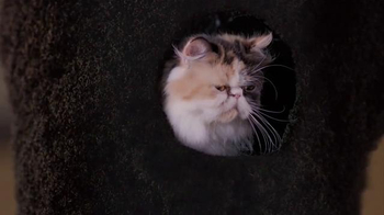Trolli Sour Brite Crawlers TV Spot, 'Cat-Fro' - Thumbnail 4