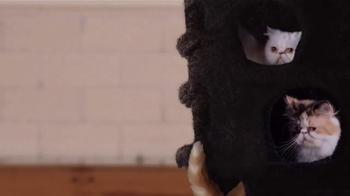 Trolli Sour Brite Crawlers TV Spot, 'Cat-Fro' - Thumbnail 6