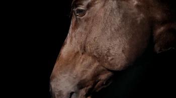 Purina TV Spot, 'Animals Speak Louder Than Words' - Thumbnail 4