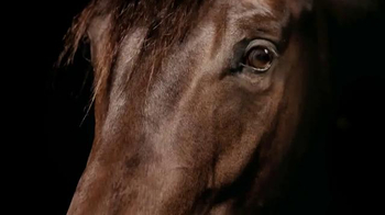 Purina TV Spot, 'Animals Speak Louder Than Words'