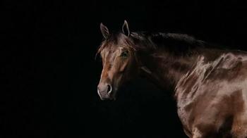 Purina TV Spot, 'Animals Speak Louder Than Words' - Thumbnail 8
