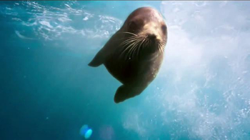 SeaWorld TV Spot, 'The Only Place Where Real and Amazing Live.' - Thumbnail 4