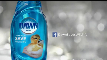 Dawn Ultra TV Spot, 'Rescatistas de la vida silvestre' [Spanish] - Thumbnail 9