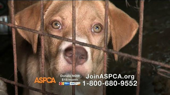 ASPCA TV Spot, 'A Kind and Gentle Touch' Featuring Lori Loughlin - Thumbnail 3