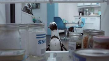 Penguins thumbnail