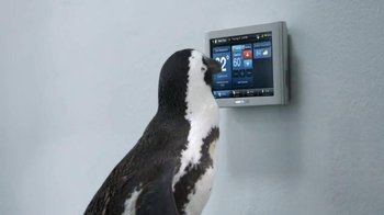 American Standard TV Spot, 'Penguins' - Thumbnail 5