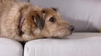 Dyson V6 Absolute TV Spot, 'Mischievous Pets' - Thumbnail 2