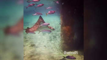 Discover the Palm Beaches TV Spot, 'Friends Trust Friends: Not Ads' - Thumbnail 3