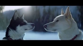 2017 FIAT 500X Crossover TV Spot, 'Dogsled' Song by The Stooges [T1] - 85 commercial airings