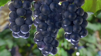 Welch\'s Grape Juice TV Spot, \'Something for Everyone\'