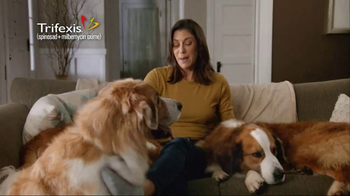 Trifexis TV Spot, 'Life With Three Dogs' - Thumbnail 7
