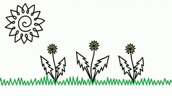 Kill Lawn Weeds thumbnail