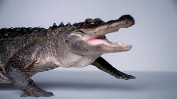 Lubriderm Daily Moisture TV Spot, 'Alligator' - 4419 commercial airings