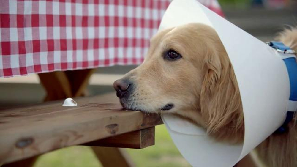Blue Bunny Ice Cream TV Commercial, 'The Dog in a Cone Can ...