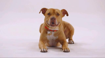 The Shelter Pet Project TV Spot, 'Bentley' - Thumbnail 2