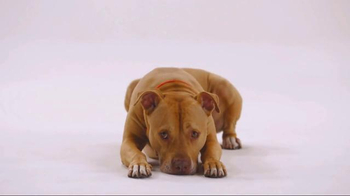 The Shelter Pet Project TV Spot, 'Bentley' - Thumbnail 3