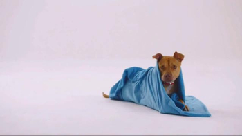 The Shelter Pet Project TV Spot, 'Bentley' - Thumbnail 4