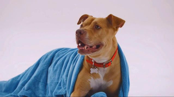 The Shelter Pet Project TV Spot, 'Bentley'