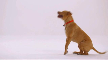 The Shelter Pet Project TV Spot, 'Bentley' - Thumbnail 6
