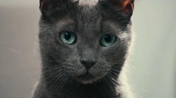 Sheba Meaty Tender Sticks TV Spot, 'What Cats Want' Song by REO Speedwagon - Thumbnail 2