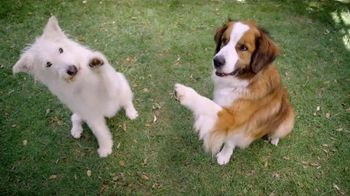 Blue Buffalo Sizzlers TV Spot, 'Raise a Paw' - 160 commercial airings