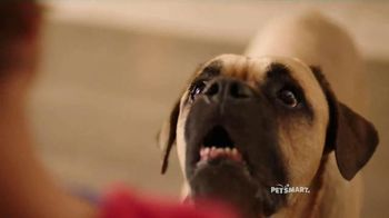 PetSmart TV Spot, 'Natural Balance' Song by Queen