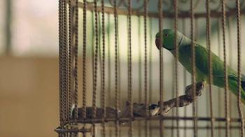 Amazon Echo Dot TV Spot, 'Alexa Moments: Parrot' - Thumbnail 1