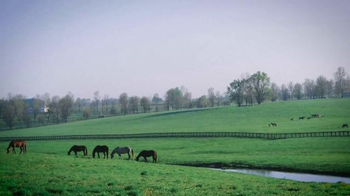Claiborne Farm TV Spot, 'Steeped in Tradition' - Thumbnail 2