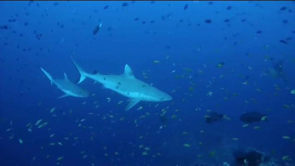 Lokai Oceana Shark Bracelet Tv Commercial Discovery