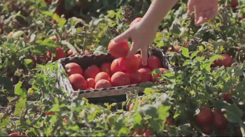 Red Gold Tomatoes TV Spot, 'Kids Give the Tour' - Thumbnail 7